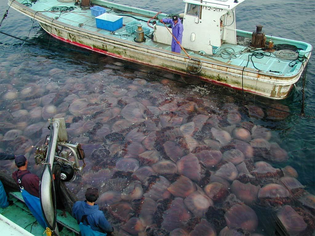 invasione meduse mediterraneo surriscaldamento mari italia